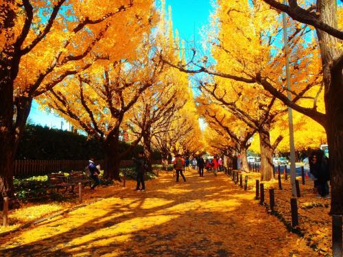 黄葉の絨毯の上を歩き