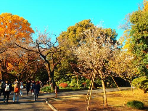 「子福桜」こぶくさくら<br /><br />秋から冬にかけて咲く桜。