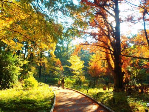 秋になると枝が鳥の羽のように落葉することから「落羽松」という。
