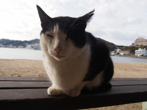 おとなしい猫ちゃんがベンチでのんびりしていたので、ご挨拶を。<br />眠たそうだったね。
