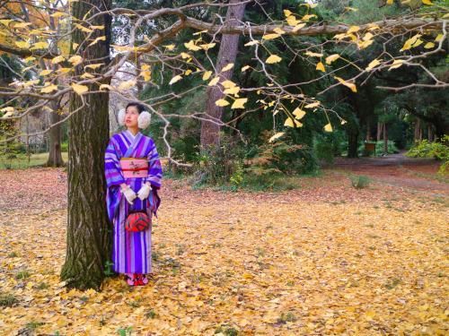 秋の楽しみ、京都で紅葉狩り!<br />紅葉の名所は数あれど、一年中観光客の多い京都において特に混み合うこの季節。<br />毎年お出かけ先に迷います。<br /><br />一般的に京都紅葉の見頃は北の山間部は11月中頃~、市内は11月中下旬~12月頭と言われています。<br />そしてここがどこかと言うと、左京区にある京都府立植物園!<br />例年11月中下旬~12月頭に最盛期を迎えるとされる立地ですが、残念ながら11/29のこの日には少し見頃を過ぎていました。<br />今年はちょっと早かったのね~・・・<br />