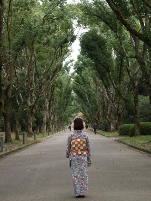 京都府立植物園<br />http://www.pref.kyoto.jp/plant/index.html<br /><br />総面積24ヘクタールを誇る園内にはもみじエリアの他、梅林桜林、薔薇をはじめとする西洋庭園、椿園にはなしょうぶ園と四季折々のお花が楽しめます。<br /><br />入場料:大人¥200<br />入口で申し出て券面裏にスタンプを押してもらえば再入場可。<br />四条から地下鉄で1本10数分という立地の良さです。<br /><br />200メートルのけやき並木が圧巻でした!<br />樹齢は80年にもなるそうです。