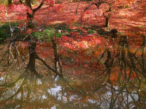 匠が織り上げる錦の如し美しさ。<br />永遠に春が続く桃源郷に秋が来たら、きっとこんな景色でしょう。