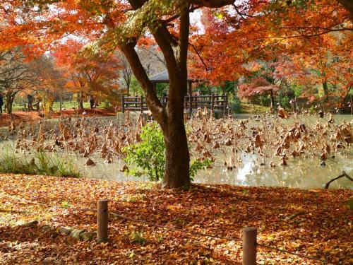 秋の蓮はまるで前衛芸術のよう。<br />濁った泥の水色も暖色グラデーションの一部と化して、不透明さに絵画らしい美しさを感じる。