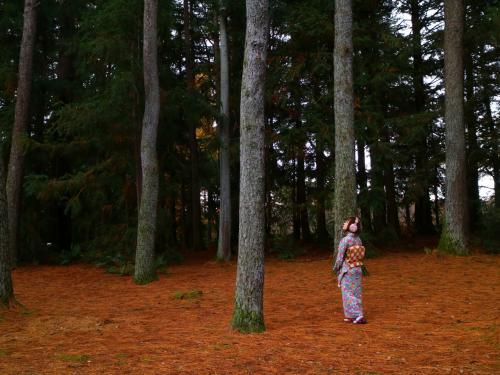 針葉樹林エリア<br /><br />世界一背の高いことで知られる常緑針葉樹、センペルセコイア。<br />ガリバー旅行記の写真かな? (つд⊂)ゴシゴシゴシ