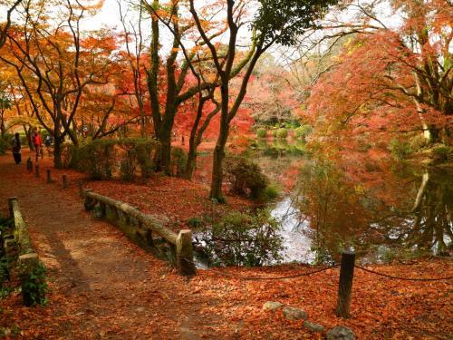 なからぎの森エリア<br /><br />3つの池に囲まれた小島と、池のほとりが一面の朱!<br />