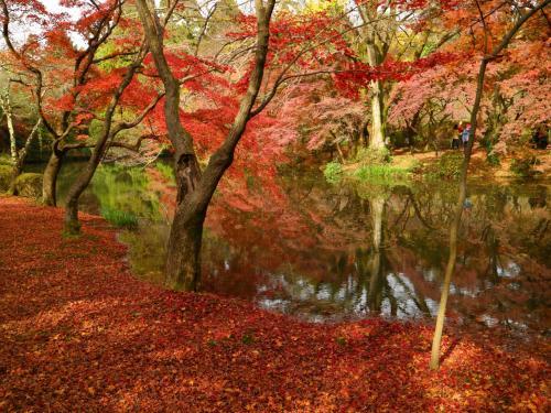 水と陸地の境が自然に作られていて神秘的です。<br />シシ神様の森もこんな曖昧な境界だった(≧▽≦)!