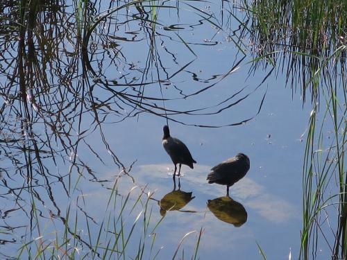 池間湿原2<br /><br /> 鳥がいっぱい、小魚も元気いっぱい遊んでおりました。