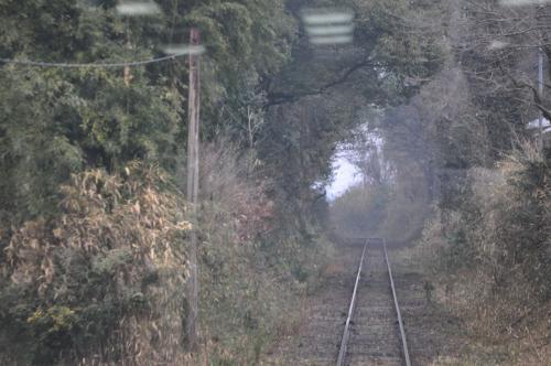 またまた森のトンネル