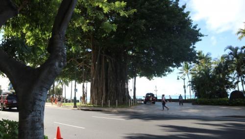 ホテルを出ると目の前にある木にパワーをたくさんもらえます♪