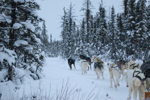 犬ぞりスタート。森の雪景色がとても綺麗でした。<br />貴重な体験できました。