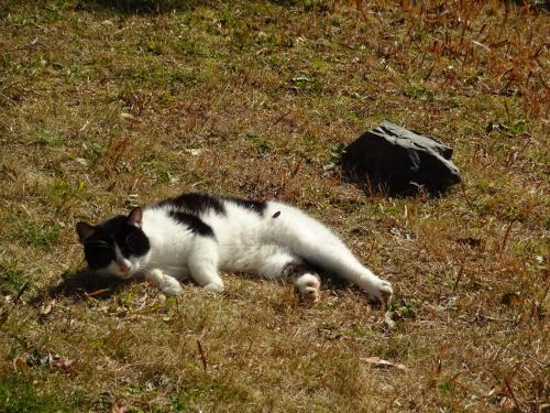 和布刈公園在住のお猫様達。<br /><br />とっても人慣れしていて、<br />近寄っても逃げることなくなでなでさせてくれます。<br /><br /><br />