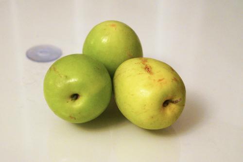 このリンゴは、ツアーバスの運転手が自分が栽培しているといって分けてくれたものです。姫リンゴの大きさまで小さくはありませんが、食べた人は、ちょっと酸味があって美味しいとの感想です。私は、歯ぐきから血が出るより、差し歯が取れてはいけないので遠慮しましたが。