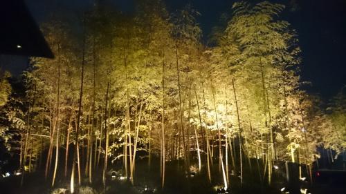 桜旅での宿泊は「ハイアット リージェンシー京都」。いつも車窓から見るこの竹林が気になってました。夜はこのようにライトアップ。ゴージャス。