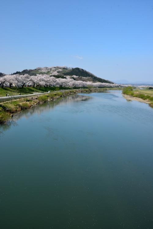 清流・白石川の堤に沿って、ピンク色のソメイヨシノの帯がどこまでも続いています。