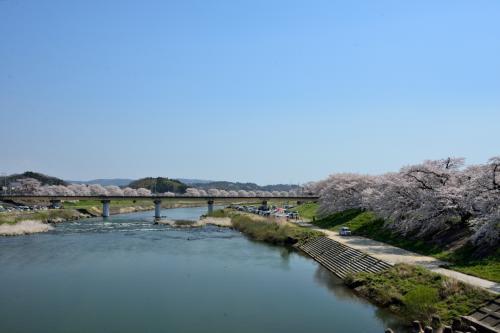 """こちらが反対の下流側(東側)。<br />この先にも桜並木が続いていて、""""日本一太いソメイヨシノ桜""""もあるようですが、時間&体力の都合上カットすることに。。。"""