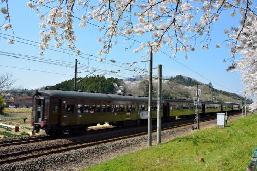 桜並木のすぐとなり(川の反対側)に、東北本線の線路が延びています。<br />あ、レトロ風の客車が目の前を走り抜けていく・・・・・・急だったので写真がブレてしまった。。。