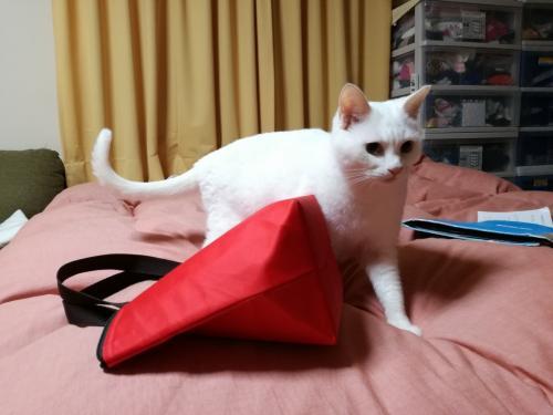 出発前日の16日夜。<br />荷物をパッキングする私たちの様子をみて、<br />何やら嫌な予感がして<br />落ち着かない愛猫ふーちゃん。<br />「また、わたしたちを置いて<br />どこか行くんじゃあないでしょうね?!」