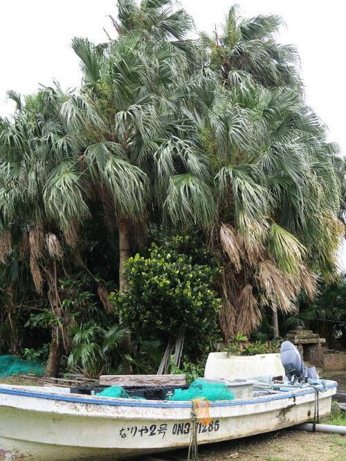 祖納地区3<br /><br /> 古くから続く祭りや儀式があるという<br />久高島のイザイホウのような