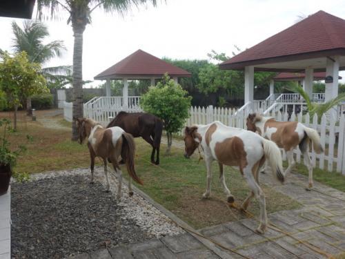 ホテル敷地内を<br />馬が自由に歩く!