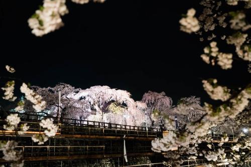 現在天守閣改築で石垣を工事してます。<br />石垣の絵の桜がまるで花火みたいです