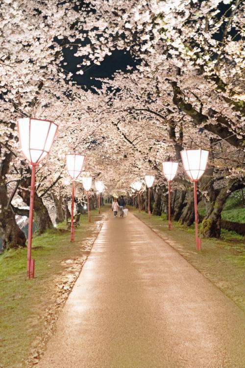 桜のトンネル<br /><br />ホントは人でごった返すところですが、天気も悪く結構遅い時間になってきたせいか人も少なくなってきました。<br /><br />それにしても良いですねーーー青春ですねーーー羨ましいですねーーーー<br />親父の独り言