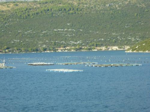 海には延々とカキの養殖施設が続いています。