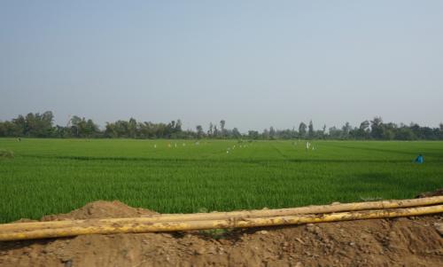少し走ると、田んぼが広がっていました。
