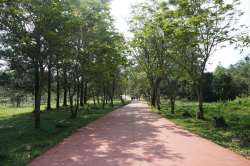 木立の間の道を行きます。