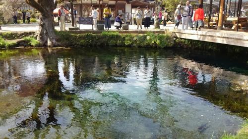 忍野八海。8つの色とりどりの池が見られます。