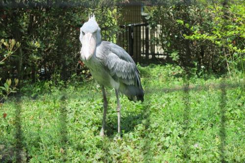 いかついです! この動物園には2羽居て、この写真はじっと君(オス)だそうです。前までの写真は何ちゃんか案内坂がありませんでした。