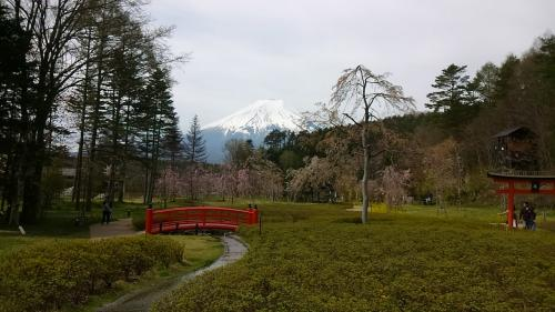 しのびの里に行ってみた。ここからも富士山。