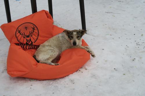 人はいないけど、スキー場専属お犬様が出迎えてくれました。