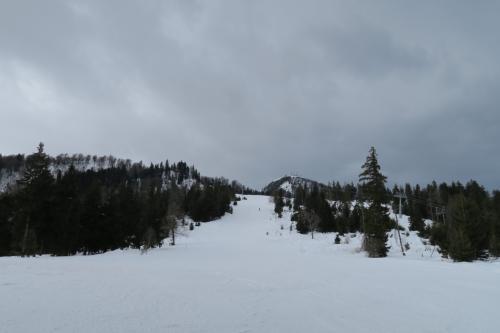 日本のスキー場かっ! 樹々の中にコースがある・・・