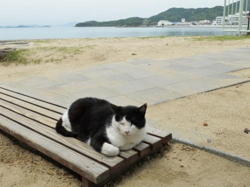 干潮の時間帯があるので、最初に訪れたのは『エンジェルロード』<br /><br />ネコちゃんが迎えてくれました。