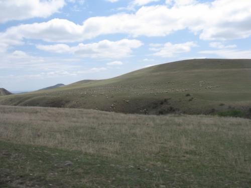 羊の群れ。<br /><br />絶景を眺めながら約3時間のドライブ。<br />但し、しつこいようだがシートはほぼ直角。