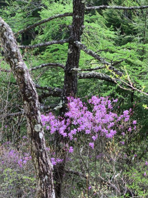 ●よく観れば花には必ず昆虫がいるものです。あたりまえですよね。いままで数千~数万年と昆虫が受粉を担ってきたのですから。それで花たちも子孫を繋いできたわけですから。だから花を見るときには昆虫も一緒に探してあげねばなりません。ただ生け花にその必要はありません。