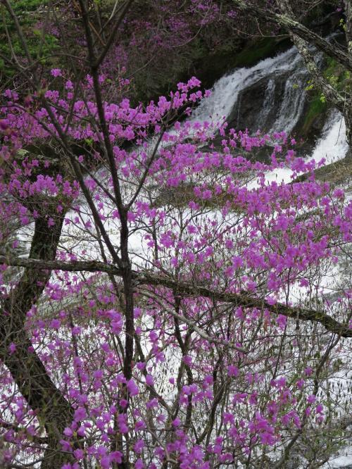 龍頭の滝<br /><br /> 日光の数々の滝は、流れ出した溶岩が川をせき止めて造られています。この滝は男体山が造ったもの。