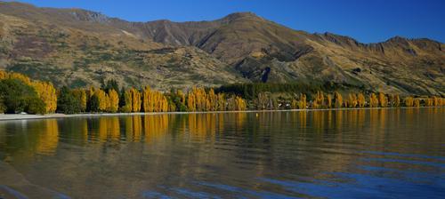 ワナカ湖畔の紅葉です。ガイドブックに掲載されているシーンと同じですね。