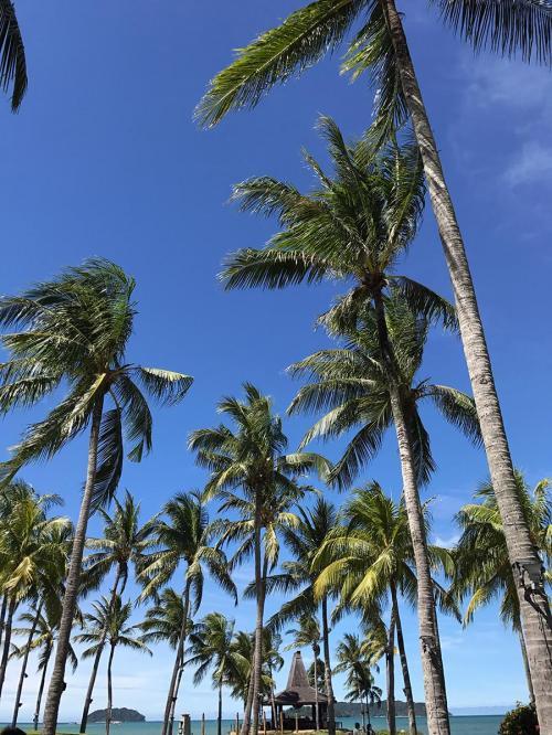 いいお天気ですが、<br />風があるので涼しくて気持ちいいです。