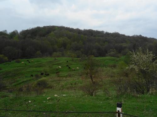 山肌には牧草地が広がります。遠くで牛が草を食んでいました。