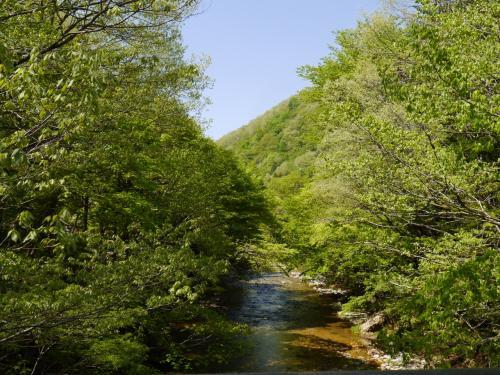 橋の上から・・綺麗な川が流れています。<br />新緑も綺麗!!<br /> <br />緑豊かな美しい景色を見ながら橋を渡って行きましょう!・・・さて、どんな花達に会えるかな?