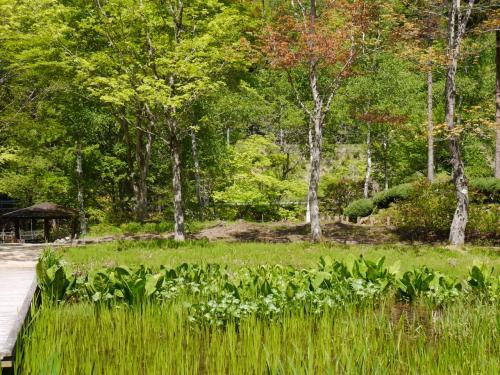 水生植物園です。<br />ここは約22000平方メートルの園内に植栽された3万本の植物が季節を彩り咲き競うそうです。<br />ここには「ヒマラヤの青いケシ」・・・天空に一番近い花、と呼ばれる花が約700株植栽されているそうです。6月初旬から中旬が見ごろらしいです。まだ早かったようで・・・残念!見たかったな(>_<)<br /><br />