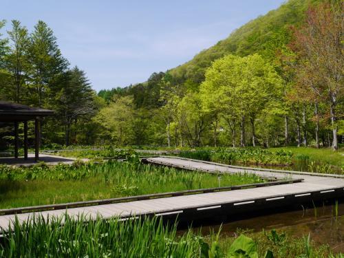水生植物池にはまだ、花は咲いていませんでした。<br />もう少ししたら、あやめや水連などが咲くのでしょうね!