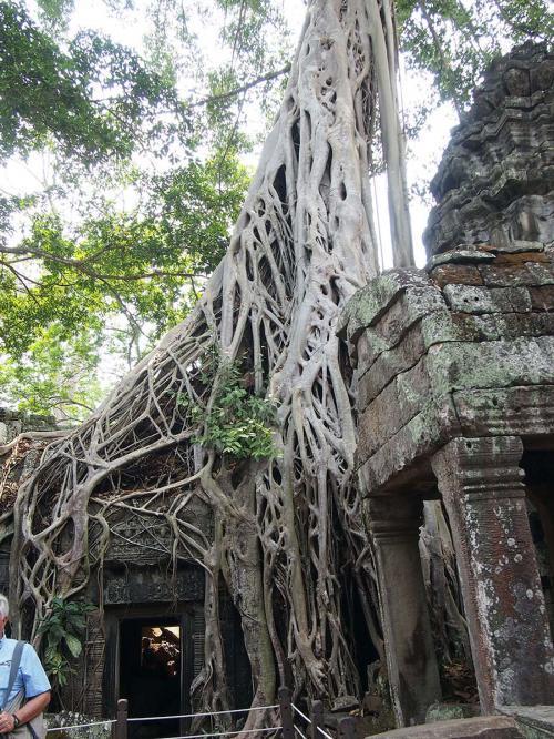 遺跡が樹木に押しつぶされてる。<br />神秘的。