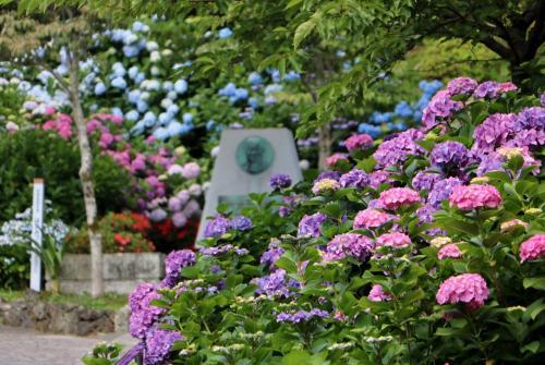 カーター記念碑の周りはカラフルな紫陽花で溢れていました・・・