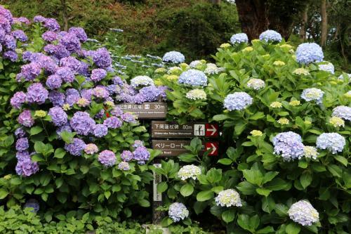 下田公園には、5年前に爪木崎の水仙を見に来た時に立ち寄ったことはありましたが、この時期に来たのは初めてです。