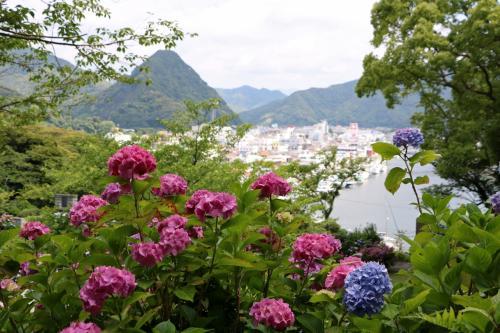 紫陽花越しには下田富士と下田の街が・・・