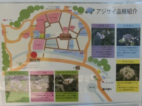 「あじさいの森」にある平面図と「アジサイ品種紹介」の立て看板です。<br /><br />「万博記念公園だより(6月号)」によると、万博記念公園には30品種、約4000株の「アジサイ」があるそうです。