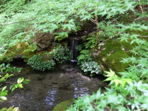 緑の中の滝。